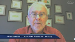 Researchers created a new type of seaweed that tastes like bacon!