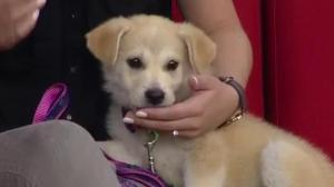 Sky looking to be adopted from Saskatoon SPCA