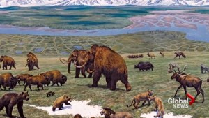 Was Haida Gwaii home to wooly mammoths?