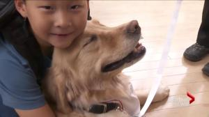 YVR introduces pet therapy program