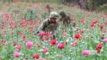 Mexico declares war on poppies to combat cartel opioid trade