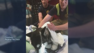 Puppy reunites with Regina fire captain who saved him from drowning