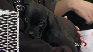 Adopt a Pet: Rats & dogs