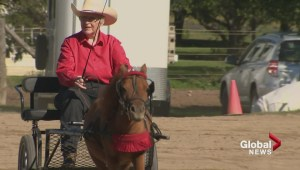 Equestrian drill team taking county fair by storm