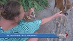 New 'Downtown Deer' video raises concerns