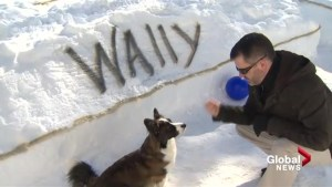 N.B. man hand digs snow maze for 4-year-old corgi Wally