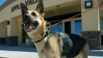 Dog opens 3 doors to escape shelter in search of previous owner