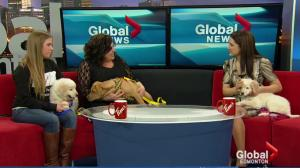 Puppies visit the Morning News to promote the Edmonton Pet Expo