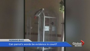 Should a parrot's testimony be valid in court for Michigan murder trial?