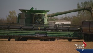 Harvest in full swing on the Prairies;  farmers urged to proceed with caution