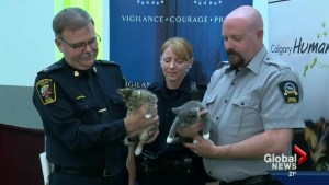 Calgary Humane Society issues warning after series of incidents involving cats