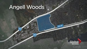 Angell Woods Update
