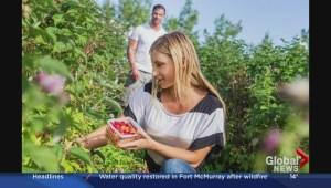 Alberta Bound: explore local food this summer