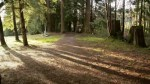 Two more sex assaults in Burnaby