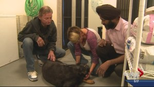 DOG ATTACK UPDATE: Kelowna Rottweilers on road to recovery