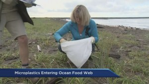 New evidence microplastics are entering food chain
