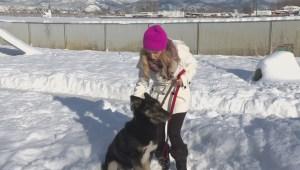 Adopt a Pet: Kimber