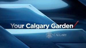 Your Calgary Garden: Sep 27