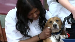 Federal funding could further pet health