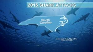 Record amount of shark attacks on U.S. east coast has many thinking of 'Jaws'