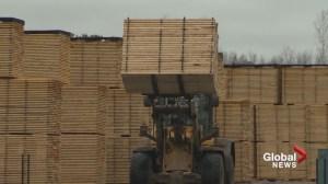 Sawmills in N.B. have tough decisions ahead