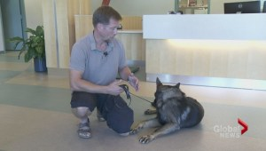 First responders learn first aid for dogs