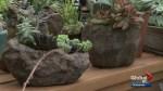 Gardenworks: Succulent rock gardens