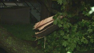Raw Video: Downed tree in NDG