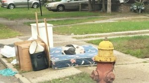 Abandoned dog waits for owners on mattress after family moves out