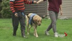 Spike in demand for autism support dogs