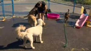 Calgary doggy daycare opens canine splash park