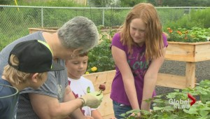 Riverview community garden project