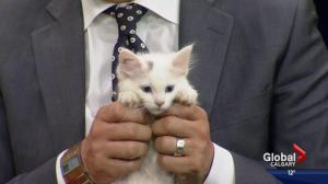 Pet of the Week: Alfredo