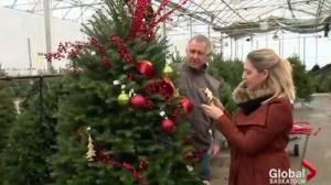 How to choose and care for a Christmas tree