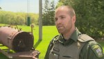Manitoba Conservation officer offers tips on black bear encounters