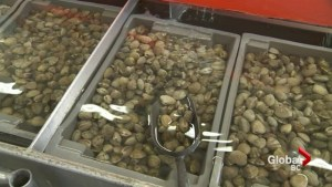 BC's shellfish industry in crisis