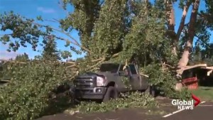 Red Deer cleans up after powerful wind storm