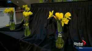 Daffodil days kicks off this week