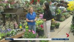 Get Gardening: Maintaining Your Garden