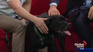 Pet of the Week: Karma