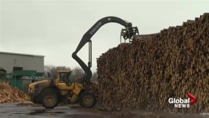 New Brunswick looks for 'fair deal' on softwood tariff despite Nova Scotia going own way