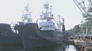 Japan's whaling fleet resumes hunt