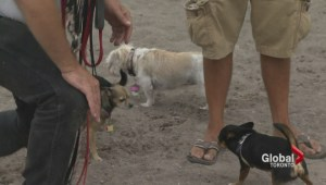 National dog day celebrates canine companionship