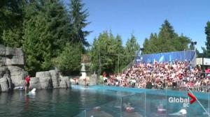 Possible public vote to keep whales at Vancouver Aquarium