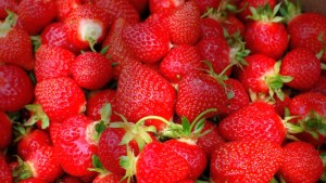 Strawberries hit B.C. store shelves earlier than usual