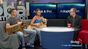Second Chance Animal Rescue Society: Ellie and Rudy
