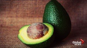 Researchers say avocado seed husks are 'gold mine' of chemical compounds