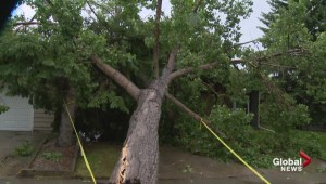 Severe thunderstorm uprooted trees, damages nearby homes and power lines
