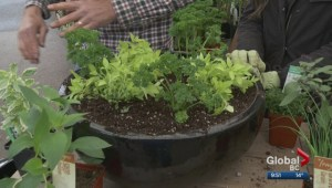 Gardenworks: Father's Day herb planter