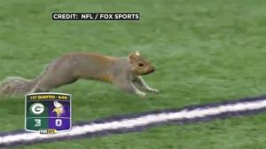 Squirrel runs onto the field in the middle of NFL game in Minnesota